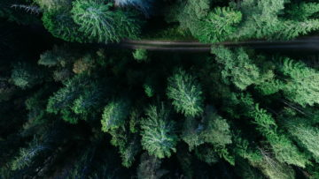 forest-trees-road-2